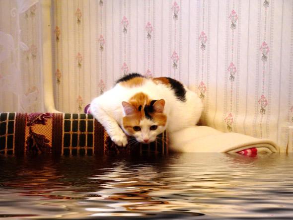 Квартирный потоп