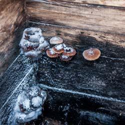 грибы в колодце