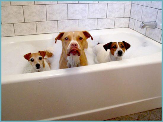 профилактика загрязнений акриловой ванны